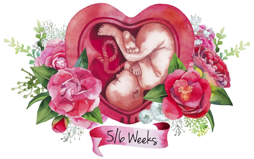 Episode #022: Pregnancy Series: Weeks 5+6